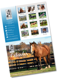 You are currently viewing 2020 Equine Advocates Calendar Available Now!