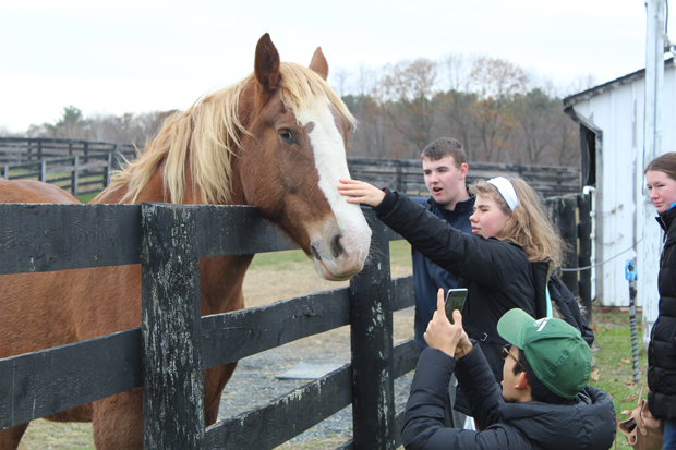 You are currently viewing Thank you for spending your weekends with Equine Advocates