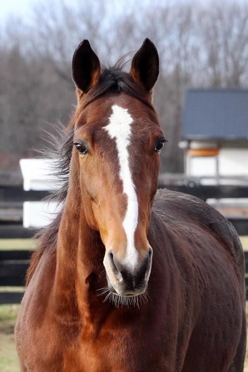 Austin - Brown Horse