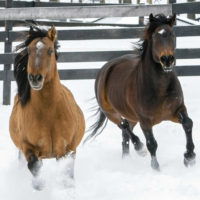 """The Path """"Backward"""" for Wild Horses and Burros"""