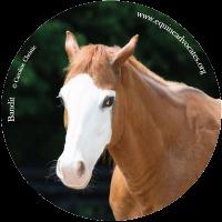 Sticker Mule Donates to Equine Advocates