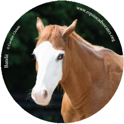 You are currently viewing Sticker Mule Donates to Equine Advocates
