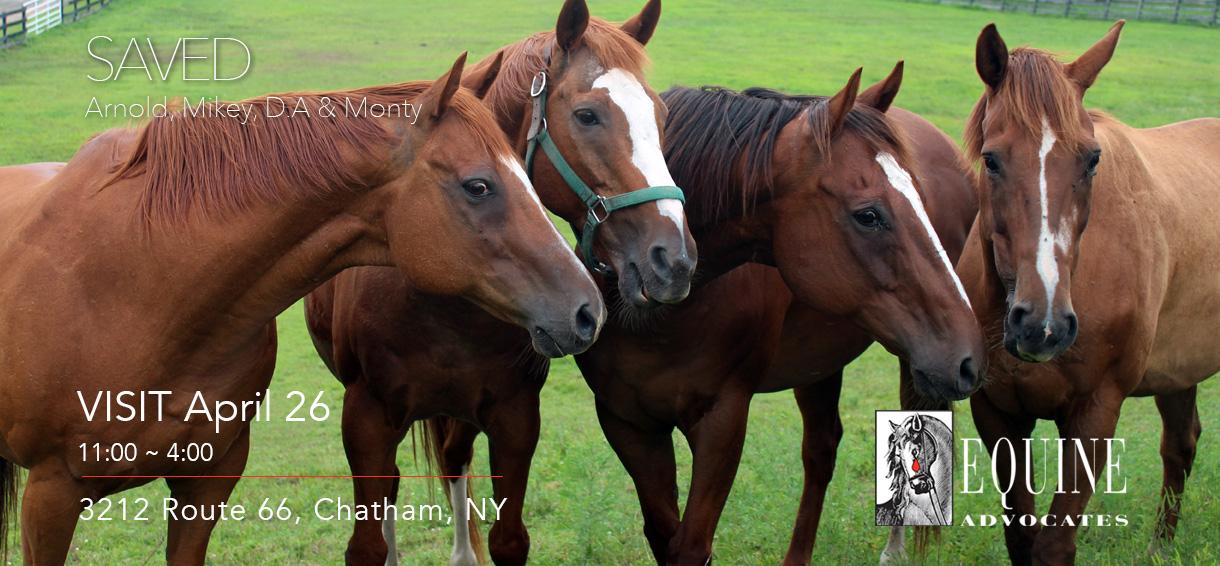 Equine Advocates Open Days 2020
