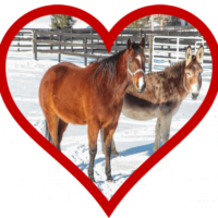 Equines Make the Perfect Valentine!