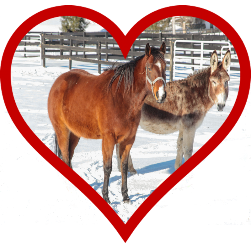 You are currently viewing Equines Make the Perfect Valentine!