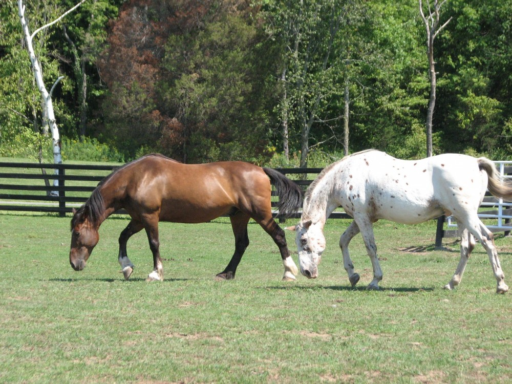 Two horses, one brown and one white, in a field