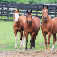 Equine Advocates Launches Fun From Home Activities