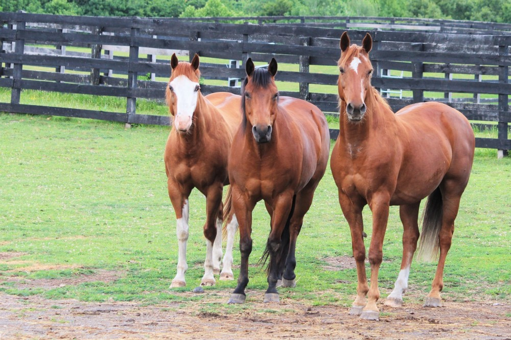 Spirit, Kip and Bandit at Equine Advocates