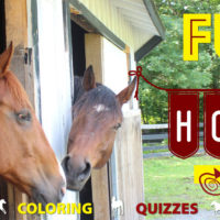 Check Out Equine Advocates New Tutorial Videos