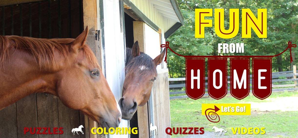 You are currently viewing Check Out Equine Advocates New Tutorial Videos