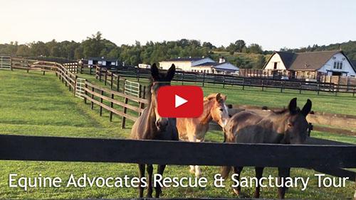 Equine Advocates Sanctuary Tour