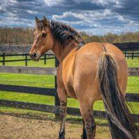 VIDEO: Kachina's Amazing Journey to Equine Advocates