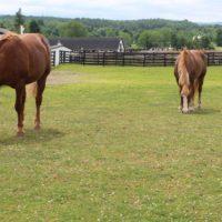 Equine Advocates Introduces New Video Series