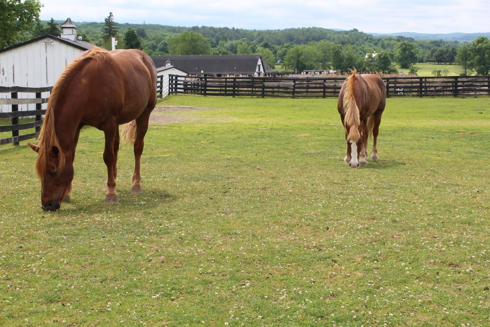 You are currently viewing Equine Advocates Introduces New Video Series