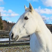 Meet Equine Advocates Newest Resident and Proud Military Veteran- Tyler