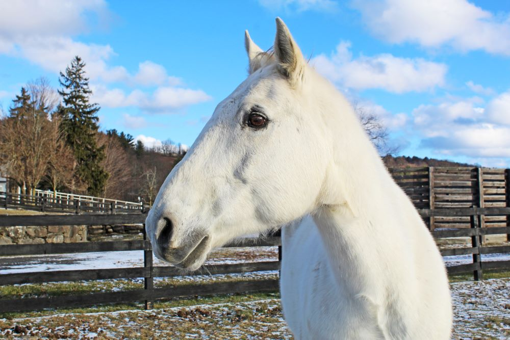 You are currently viewing Meet Equine Advocates Newest Resident and Proud Military Veteran- Tyler