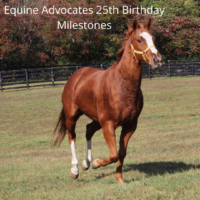 Equine Advocates 25th Birthday Milestones Part 3