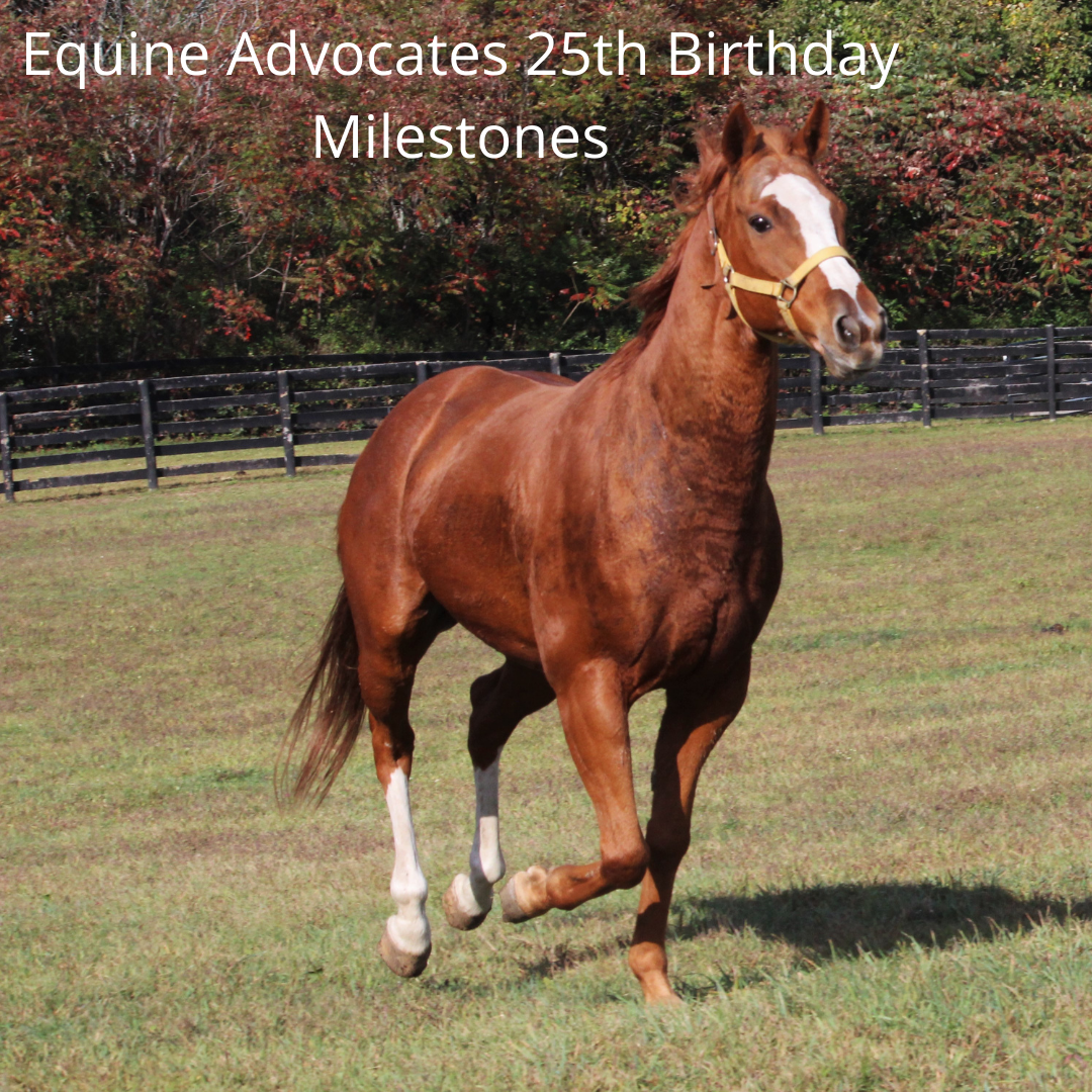 You are currently viewing Equine Advocates 25th Birthday Milestones Part 3