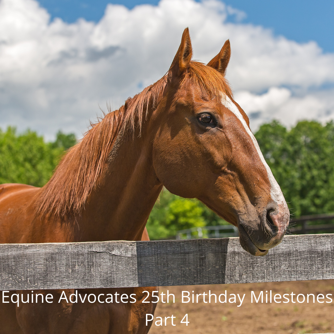 You are currently viewing Equine Advocates 25th Birthday Milestones Part 4