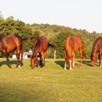 Equine Advocates 25th Birthday Milestones Part 1
