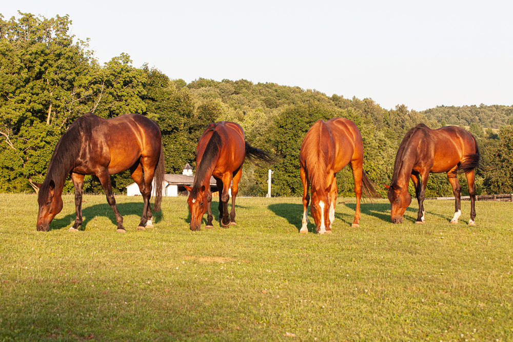 You are currently viewing Equine Advocates 25th Birthday Milestones Part 1