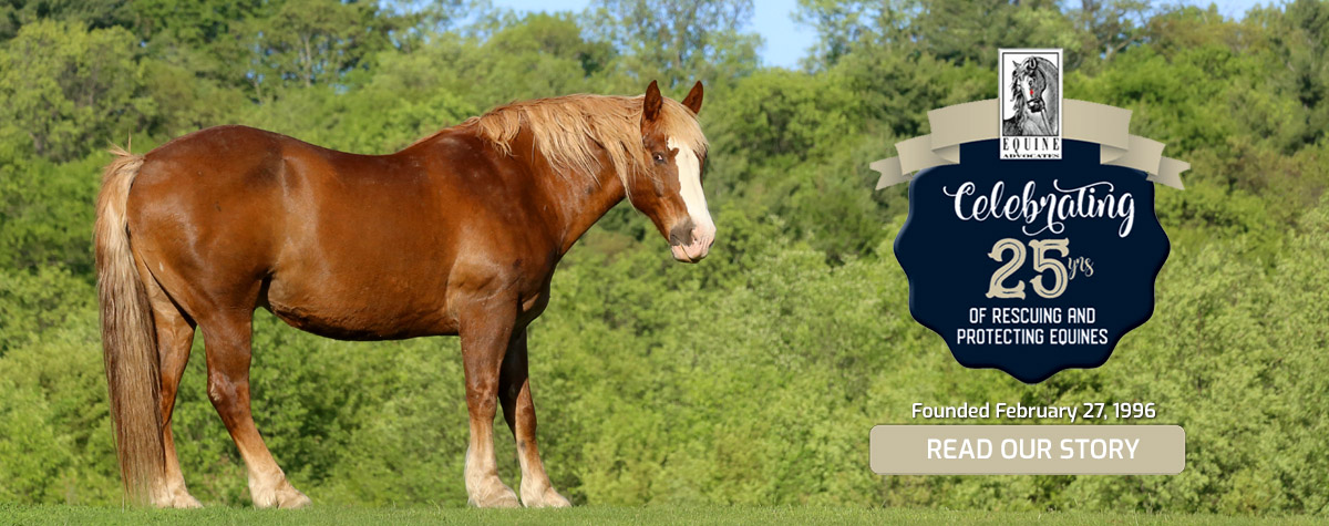Equine Advocates