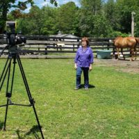 Equine Advocates Featured on News 10 ABC