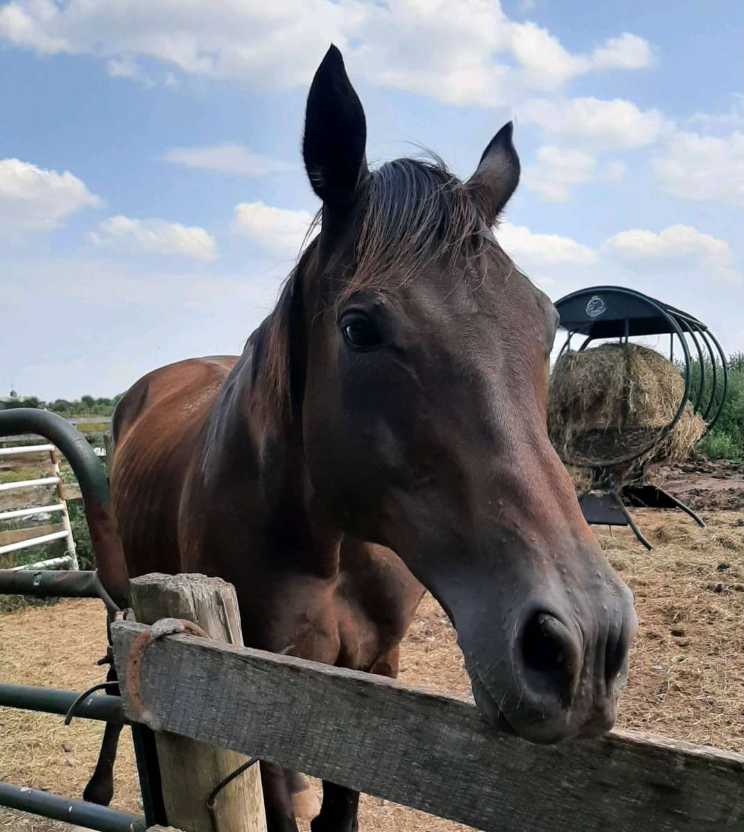 You are currently viewing Newly Rescued Horse Sailing Through Quarantine!