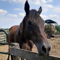Newly Rescued Horse Sailing Through Quarantine!
