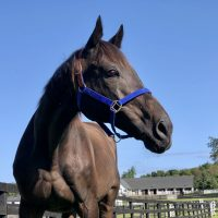 Following His Dramatic Rescue, CJ Finally Arrives At Equine Advocates
