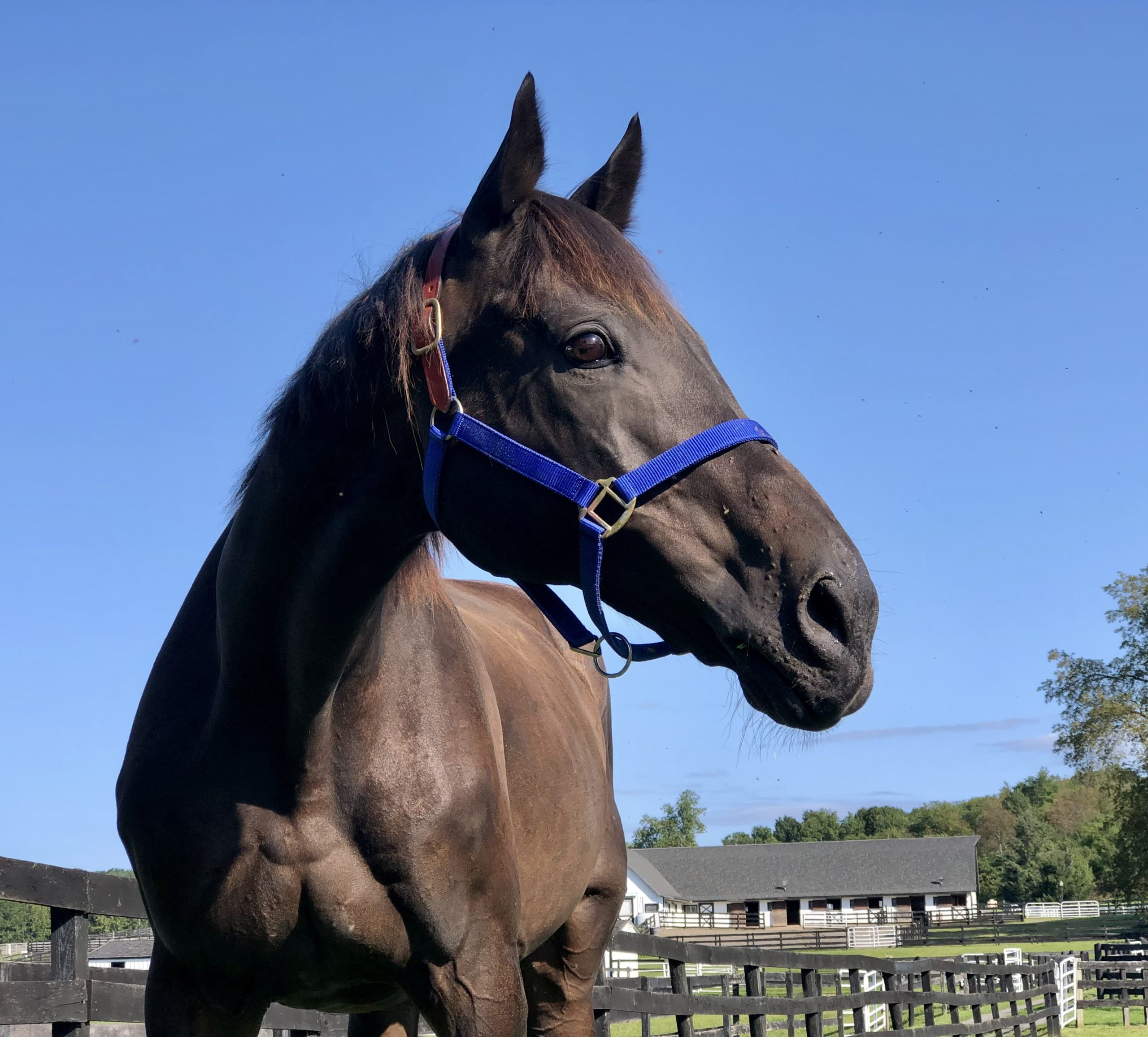You are currently viewing Following His Dramatic Rescue, CJ Finally Arrives At Equine Advocates