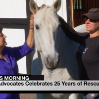 Equine Advocates featured on WNYT Newschannel 13
