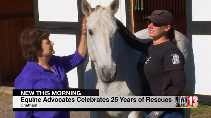 You are currently viewing Equine Advocates featured on WNYT Newschannel 13